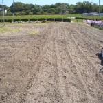 自家菜園の耕起完了!