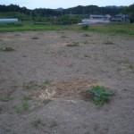 その後のソバ畑!