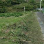 5月のソバ畑Ⅰ