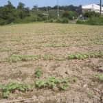 畝間の耕起