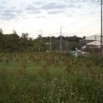 ソバ畑の「島立て」風景