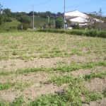 今年のソバ畑